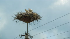 Storks are Sitting in a Nest on a Pillar. Time Lapse Stock Footage