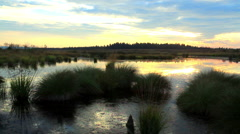 Sunset in a nature reserve Stock Footage