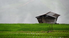 Terraced Paddy Field of Pa Bong Pieng in rainy season Stock Footage