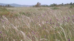 Field with flowers in alentejo Portugal Stock Footage