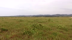 Field with flowers on a cloudy day and windy, steady cam gimbal 4k Stock Footage