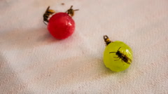 Wasps are sitting on candies CINEMAGRAPH Stock Footage