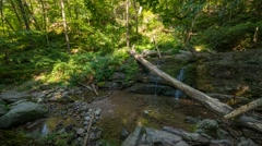 Surrounded By Nature Panning Time Lapse Stock Footage