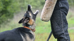 K-9 training, moment of barking closeup Stock Footage