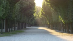 Park avenue in the rays of the setting sun Stock Footage