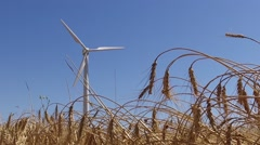 Eolic windmill turbine wind renewable energy wheat farm slow motion 120fps Stock Footage
