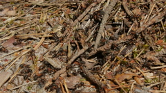 Close-up shot of small ants Stock Footage