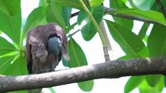 Dove on tree Stock Footage