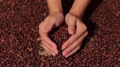 Pine nuts spilling on burlap. harvesting. spilling hands Stock Footage