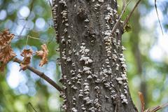 Many mushroom on a tree trunk Stock Photos