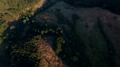 Cinematic vertical panorama in the forest Stock Footage