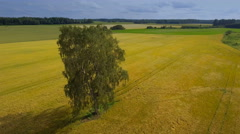 Aerial 360 view of the cereal field Stock Footage