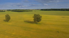 The landscape aerial view of the cereal field and the forest Stock Footage