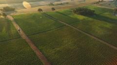 Aerial view of vineyard, Willamette Valley Oregon Stock Footage