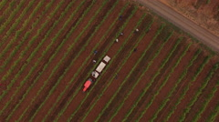 Aerial view of grape harvest at Oregon vineyard Stock Footage
