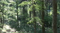 4k Beauty summer forest nature in windy Harz mountain range with pathway 4k or 4k+ Resolution