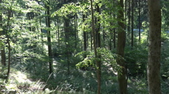 4k Beauty summer forest nature in windy Harz mountain range with pathway Stock Footage