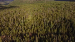 Aerial view of Oregon forest Stock Footage