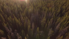 Sunset aerial view of Oregon forest Stock Footage