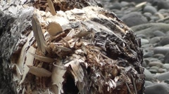 Zoom Out From Driftwood Log On Rocky Shore Stock Footage