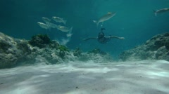 Diver Approaches Camera as Fish Feed on the Bottom with Sound Stock Footage