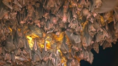 Bats Hanging from Ceiling inside Pura Goa Lawah Temple Stock Footage