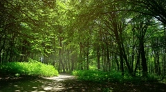 Peaceful Country Road with Bird Sounds. Video FullHD 1080p Stock Footage