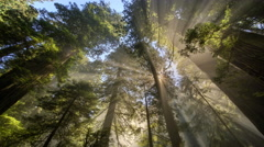 Sun rays and fog in forest in Redwood National Park, California Stock Footage