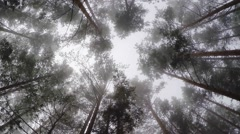 The tops of the pine trees in a mystical fog. Stock Footage