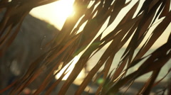 Idyllic  sunset at Greek island beach,sun sparkles through umbrellas 100p Stock Footage