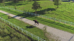 AERIAL: Female rider walking with horse and dog on beautiful sunny day Stock Footage