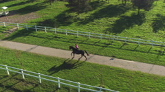 AERIAL: Beautiful gelding running along the fields with dog on sunny day Stock Footage