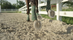 SLOW MOTION CLOSE UP: Huge dark brown gelding galloping in sandy riding arena Stock Footage