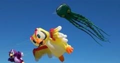 Amusing large kites, yellow parrot, purple bird, green octopus Stock Footage