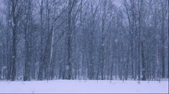 Forest with snow Stock Footage