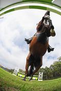 Horse Jumping Hurdle, Directly Below Stock Photos