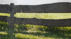 Cobweb delicately moving in a gentle breeze Stock Footage