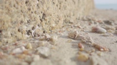 Ant Crawling on the Shells and Stones on the Beach. Slow Motion Stock Footage