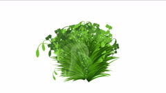 4k lush flower leaves crops shrubs bushes plant grass growing. Stock Footage