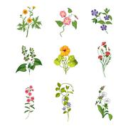 Wild Flowers Hand Drawn Set Of Detailed Illustrations Stock Illustration