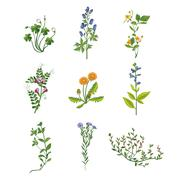 Wild Flowers Hand Drawn Collection Of Detailed Illustrations Stock Illustration