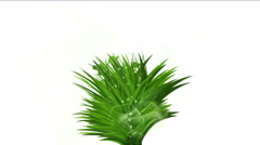 4k lush flower leaves crops shrubs bushes plant grass growing background. Stock Footage