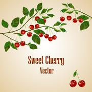 Cherry card with place for your text. Stock Illustration