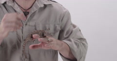 Tokay Gecko being held by zookeeper Stock Footage