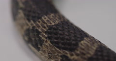 Fox snake scale pattern Stock Footage