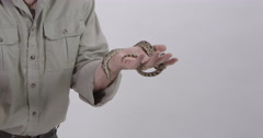 Hog Nosed snake being handled by zookeeper Stock Footage