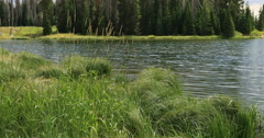 Beautiful shore high mountain lake grass and forest DCI 4K Stock Footage