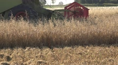Thresher machine with reel and cutter bar is cutting oats on farm field Stock Footage