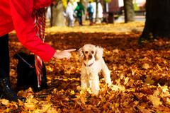 Woman admonishes poodle in a beautiful autumn park Stock Photos