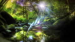 Sun moving in time lapse in forest with creek, Oregon Stock Footage